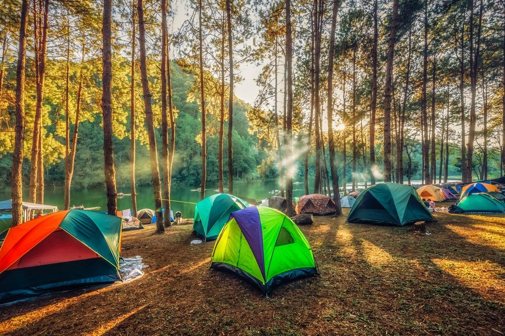 Tents set up in the forest