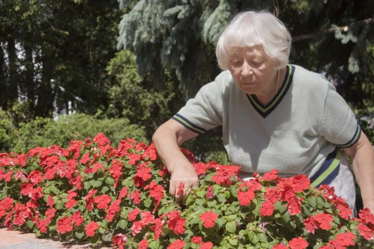 Old lady picking flowers