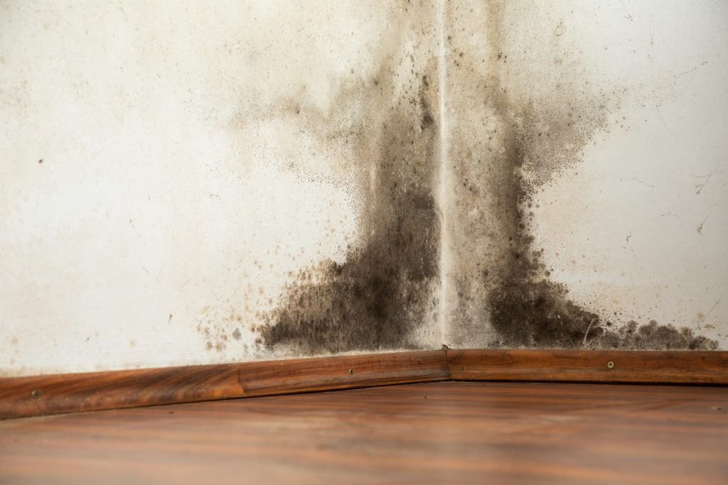 mold build up in a home's wall