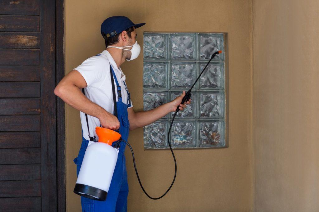 Pest exterminator getting rid of bugs